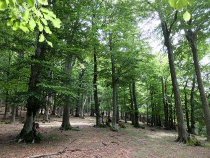 Forêt encore