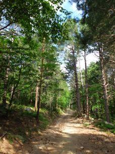 J 3 – traversée de belles forêts catalanes