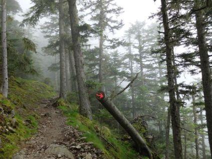 Forêts au-dessus de Batère