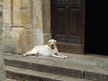 J 15 – chien de garde à St Antoine du Montcalm