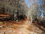 Forêt d'Ayous