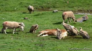 Acte 5 : Les moutons progressent