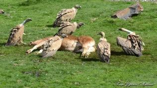 Acte 1 : Les vautours se préparent à la curée