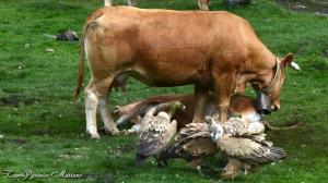 La mère protège son petit en le couvrant...