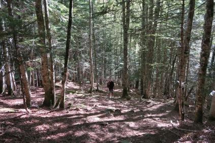 Forêt sèche pour débuter