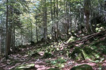 Forêt humide pour continuer
