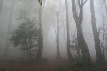 9h : Brouillard devant...