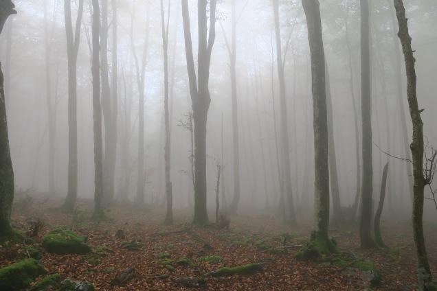 16h : Brouillard devant pour le retour