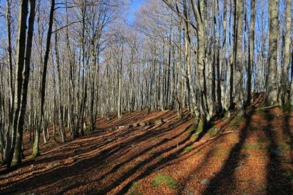 Forêt entre le Cot de Bellocq et la Cabane d'Isarce