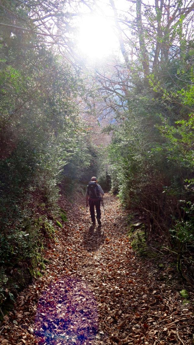 Forêt de buis au-dessus de Saligos