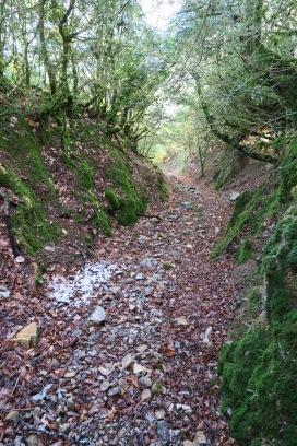 Traditionnel sentier tracé dans les buis