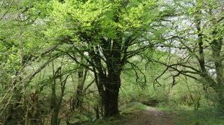 La forêt aux Esprits !