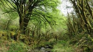 La forêt le long de l'Espougnère