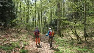 Forêt : Quand tu nous tiens...