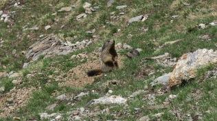 Magie : papa et Maman marmotte