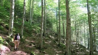 Bois de Sansanet