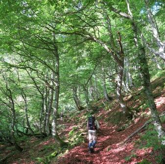 Anaye : La forêt