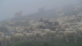 J 41 - Pays Basque : brouillard et bruine galères