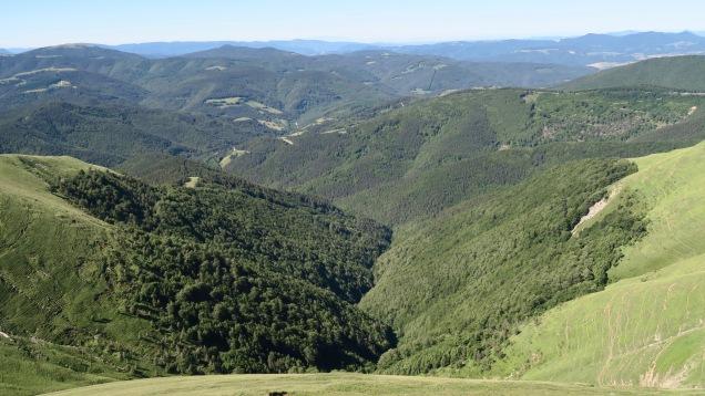 Forêt d'Irati coté navarrais