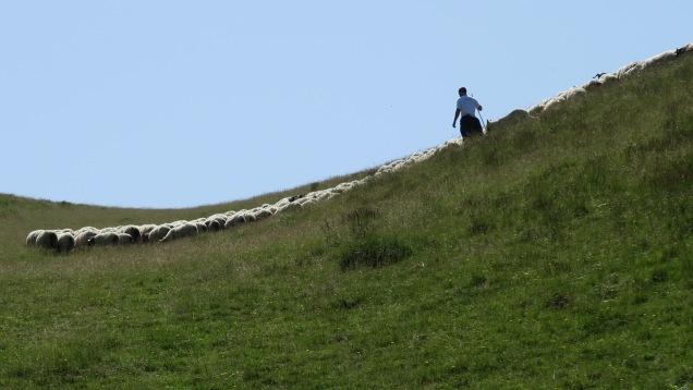 Berger et son troupeau sous la crête d'Urculu
