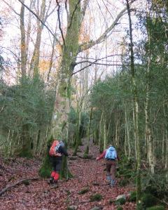 8 h - Première étape : 700 m de dénivelé de forêt