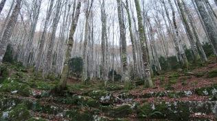 Forêt domaniale de Tres Crouts