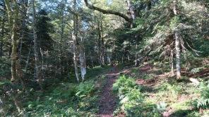Forêt du Bitet