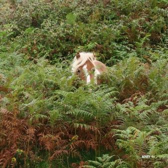 J 46 - Camouflage façon Pottock