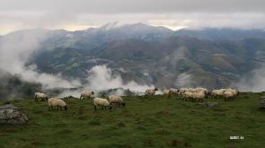 J 45 - moutons à tête noire des Aldudes