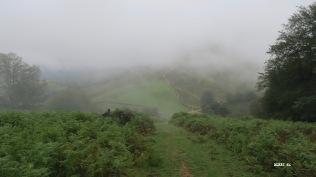 Bruine et brouillard