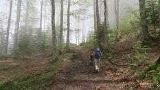 brouillard dans la forêt de Lusque