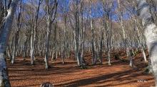 forêt au-dessus du col des Portes
