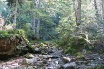 dense forêt