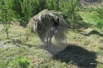 l'âne de Fatima...