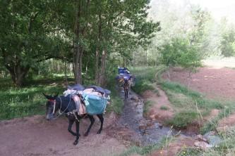 terrain facile pour les mules