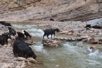 pont pour chèvres