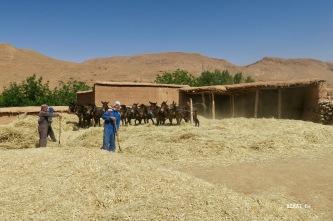 poussières assurée pour les ouvriers agricoles