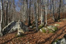 descente du bois de Larouse
