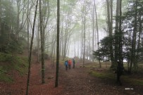 forêt enchanteresse ?