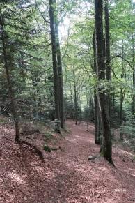 forêt de Gaberdères