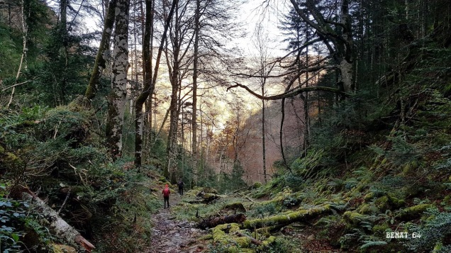 forêt de Balour