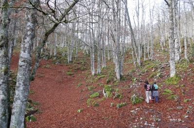 bois à l'est du Turon d'Et Curé