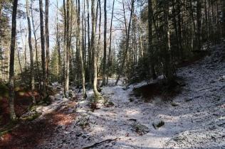 bois entre les cols d'Andorre et d'Espade