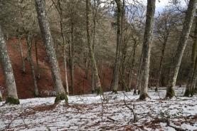 neige vers 1300 m