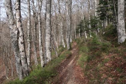 montée dans la forêt d'Anitch