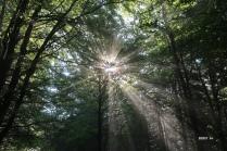 1000 m : le soleil perce